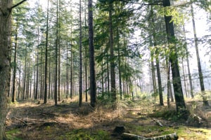 Advanced Diploma in Forest Management