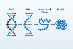 DNA Delivery and Protein Synthesis