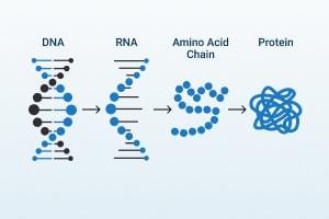 DNA Delivery e Proteine Sintesi