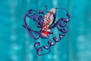 Introduction à la synthèse chimique des protéines