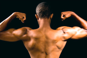 Human Muscular System - Introduzione