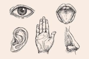 Human Sensory Organs - Introduction