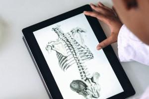 Système du squelette humain-Introduction
