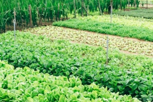 Growing Organic Food Sustainably