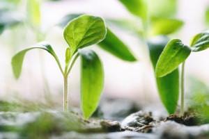 Entendendo O Metabolismo Vegetal