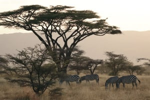 Advanced Diploma in Wildlife Conservation