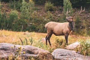 Introduzione alla conservazione della fauna selvatica