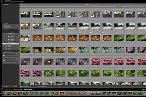 Introduction to Features of the Library Module in Adobe Lightroom
