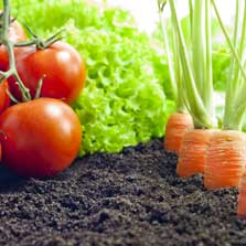 Introduction to Growing Organic Food Sustainably