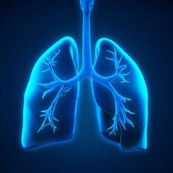 Os fundamentos da respiração celular