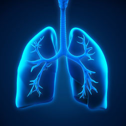 Fundamentals of Cellular Respiration