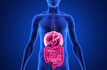 Introduzione al sistema digestivo umano