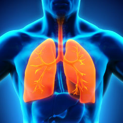 Introduction to the Human Respiratory System