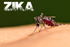 Zika Virus-Need To Know What You