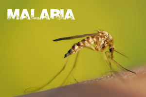 Global Health Initiative - Malaria Awareness