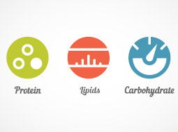 Human Nutrition - Introduction to Macronutrients